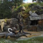 Zoo 2017 002