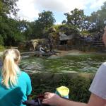 Zoo 2017 003
