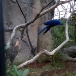 Zoo 2017 024