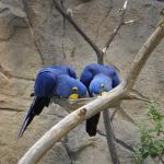 Zoo 2017 026