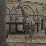 Zoo 2017 029