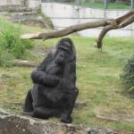 Zoo 2017 031