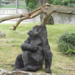Zoo 2017 034