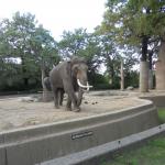 Zoo 2017 039