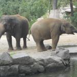 Zoo 2017 043