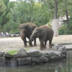 Zoo 2017 044