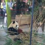 Zoo 2017 048
