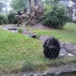 Zoo 2017 055